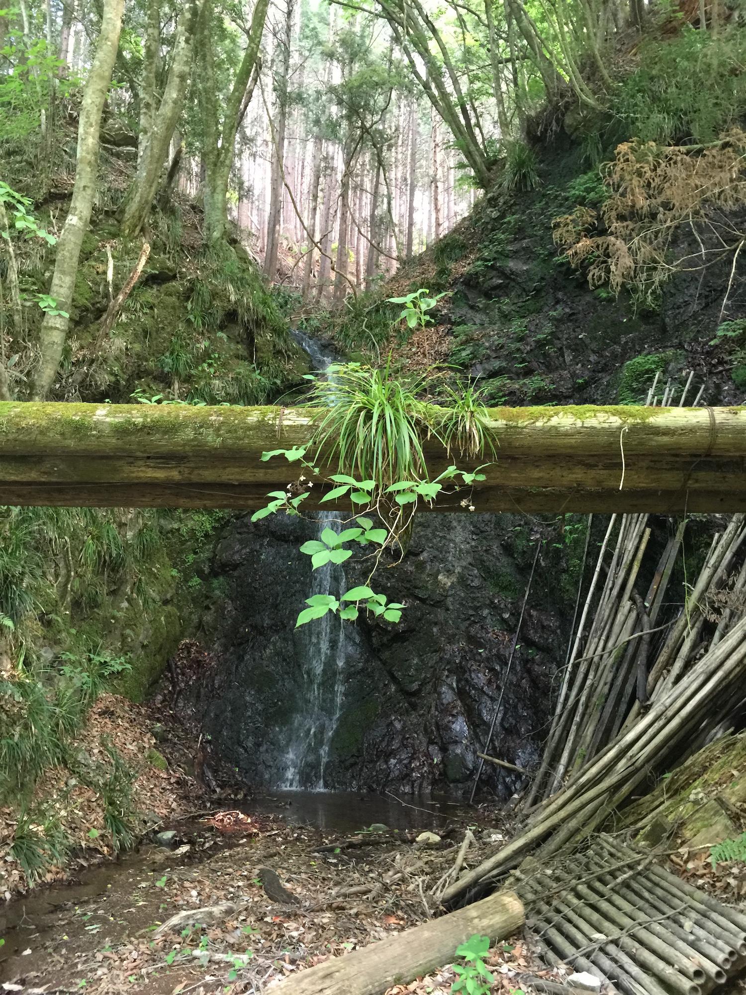 An old bamboo bridge