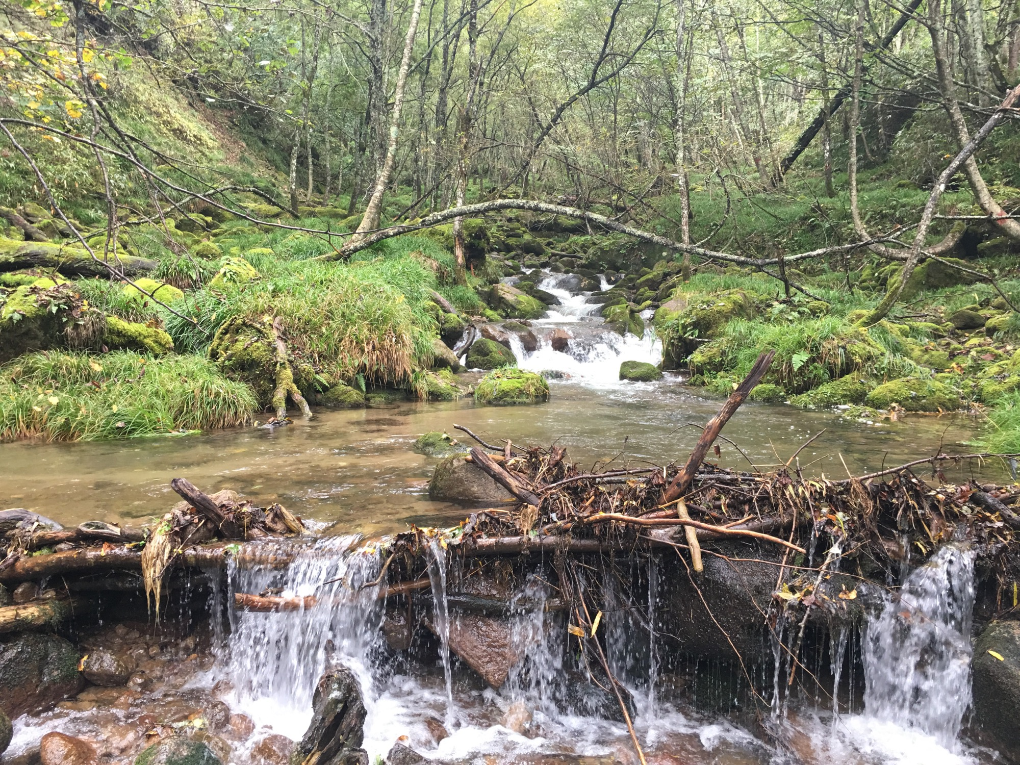 A lovely mountain stream