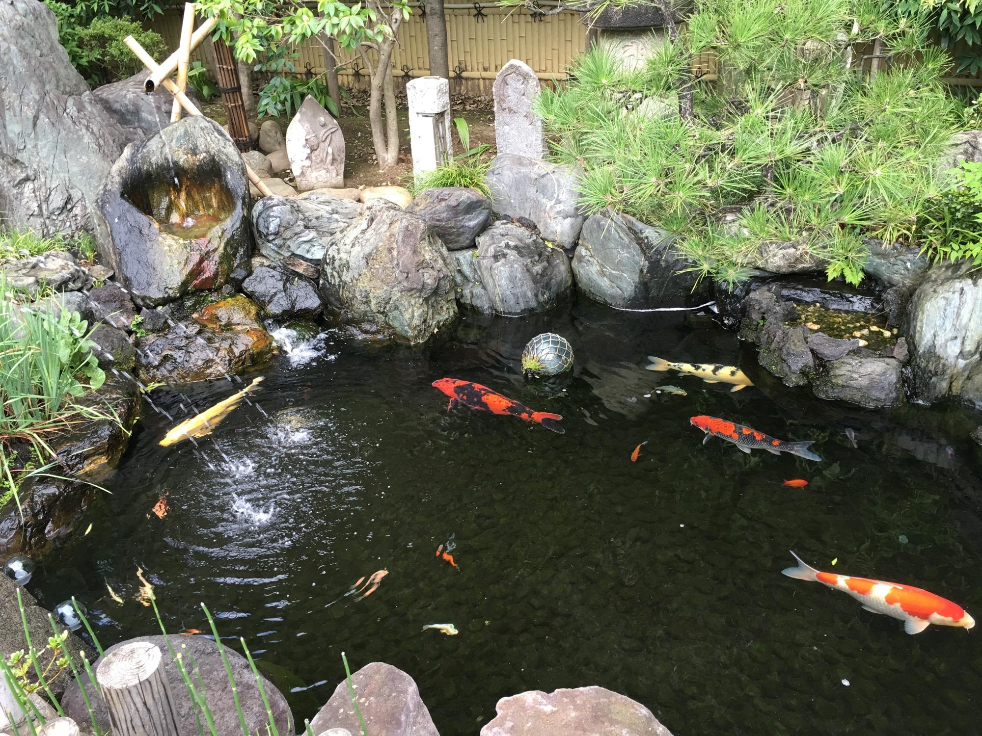 A koi pond at the shrine