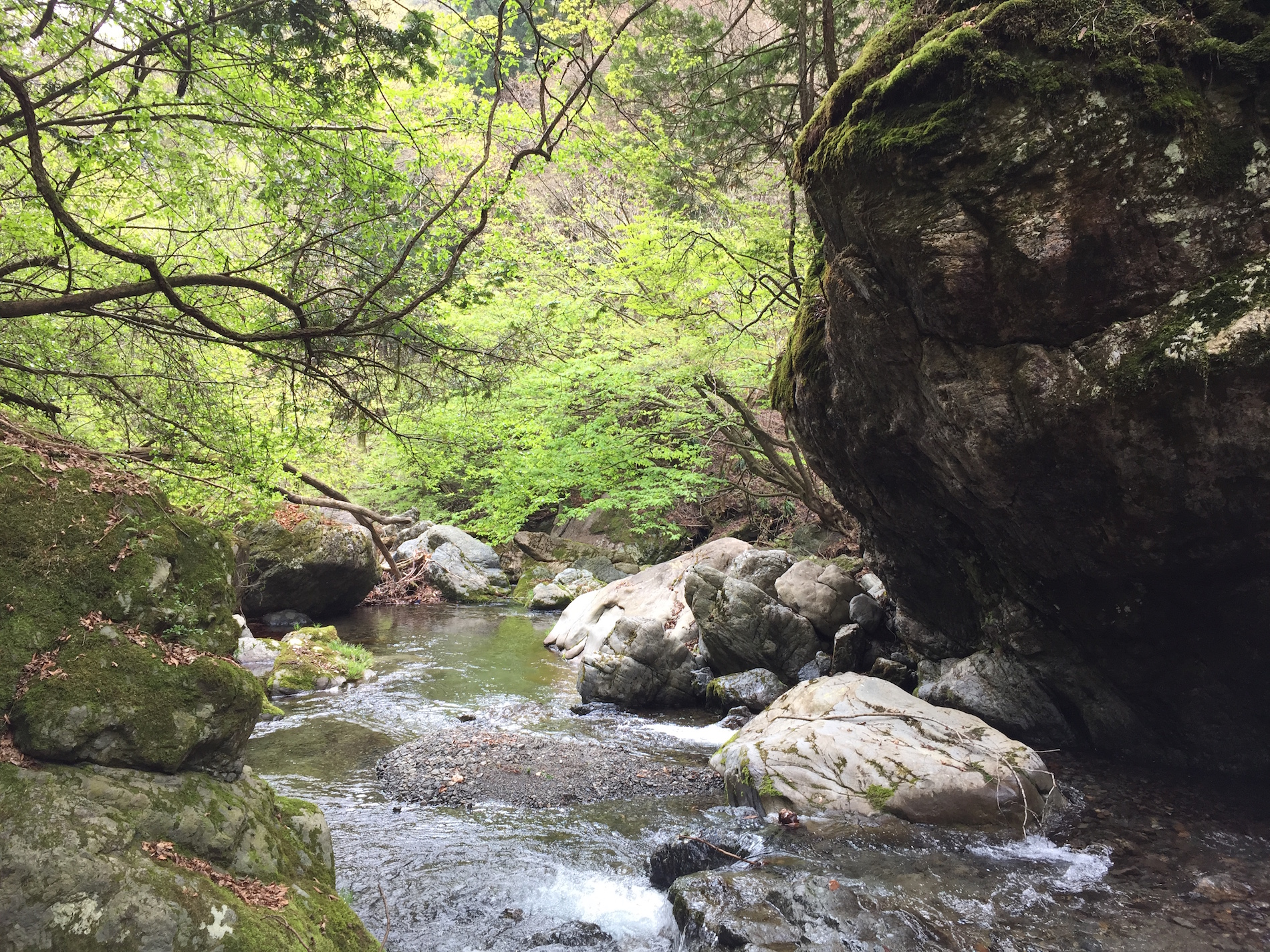 Mossy boulder & river