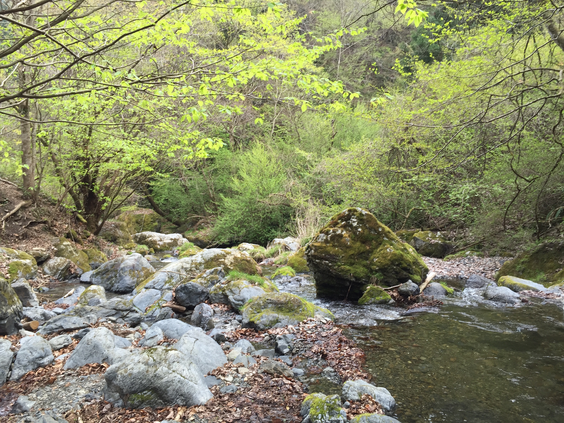 A Japanese mountains stream