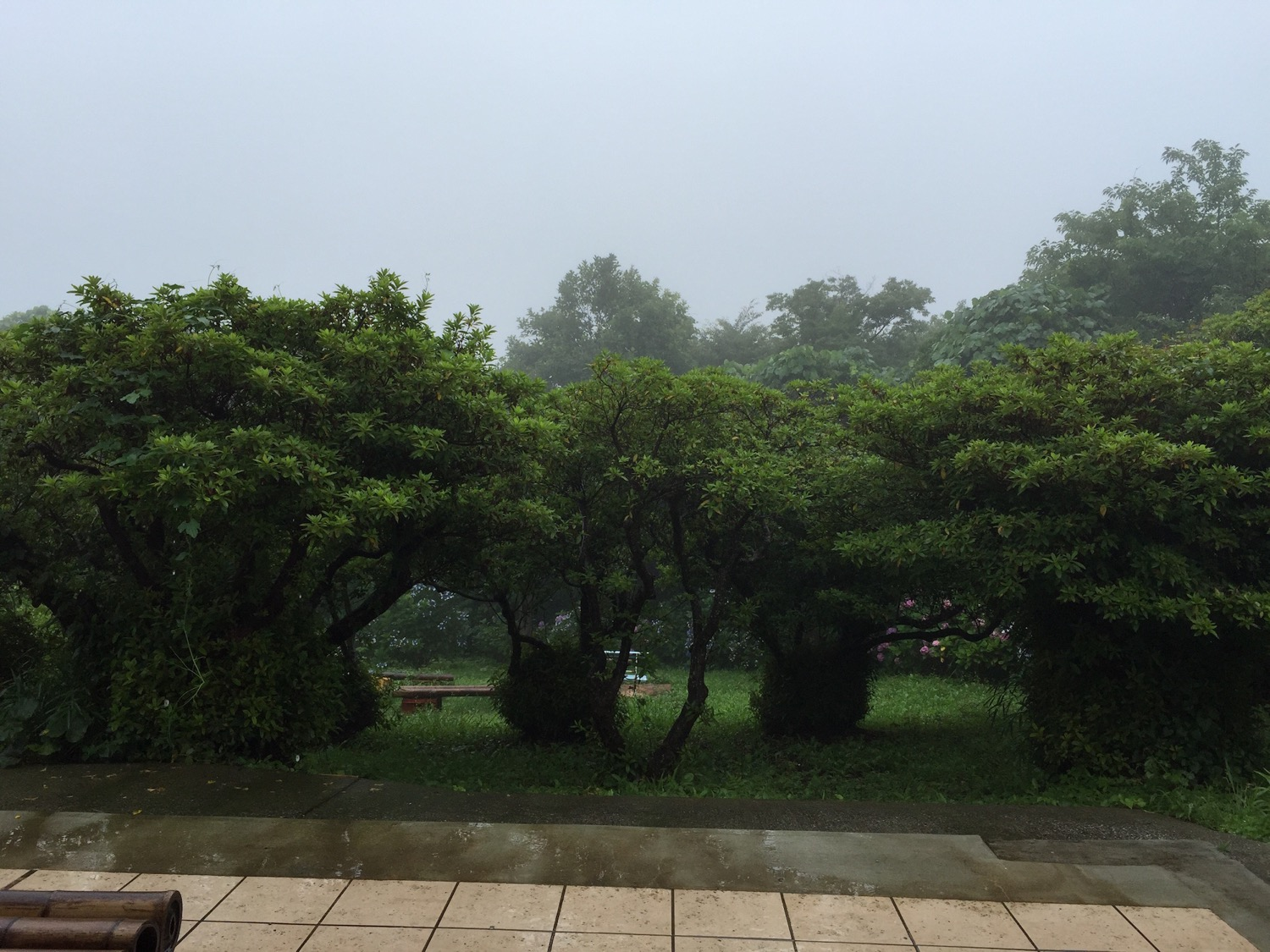 Foggy and rainy weather