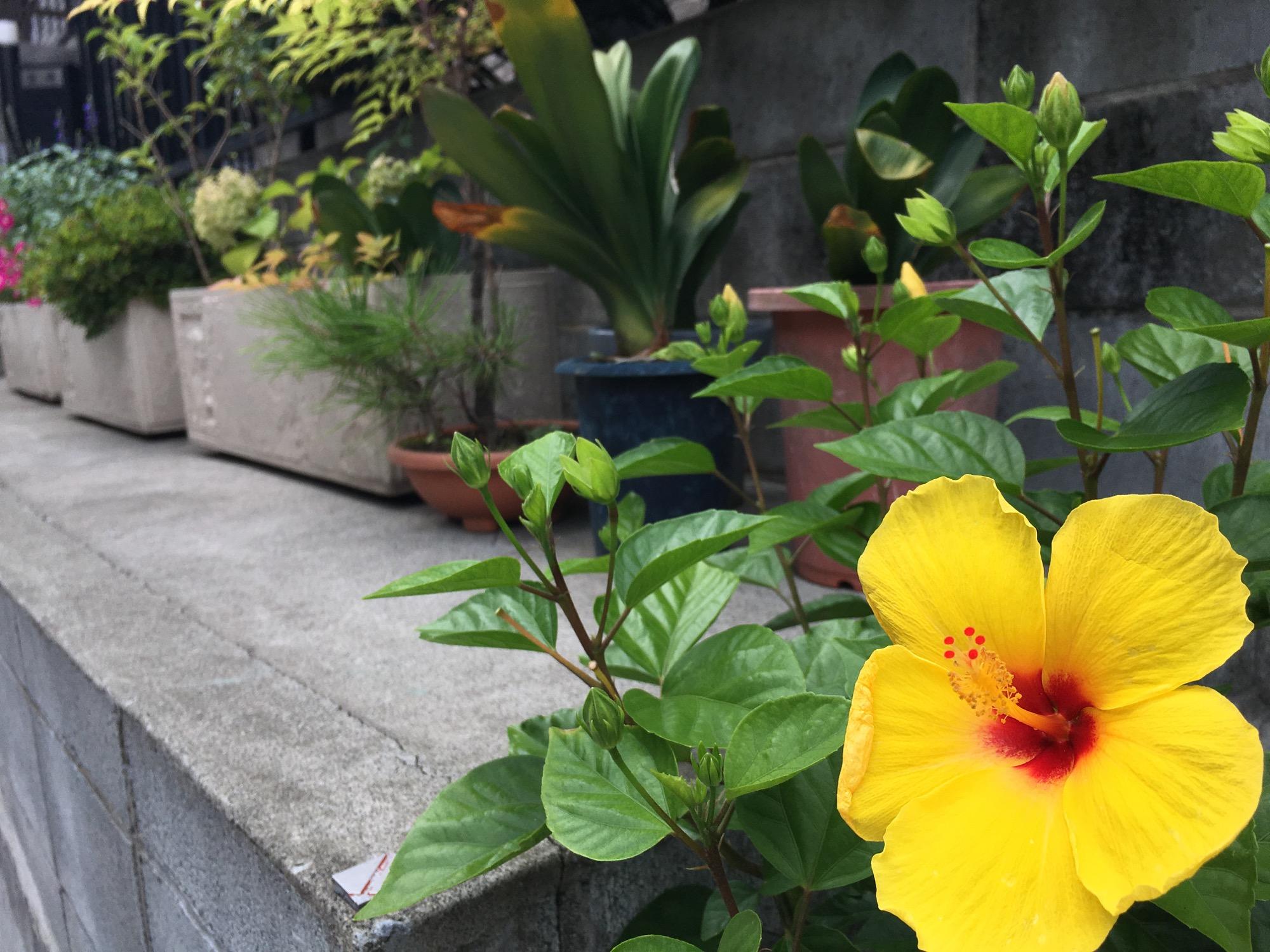 Beautiful street flowers