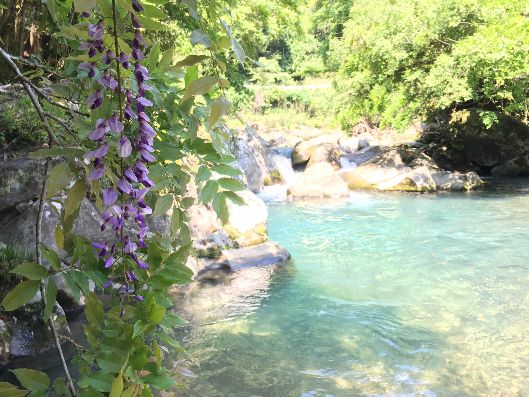 Lilac and gin clear water