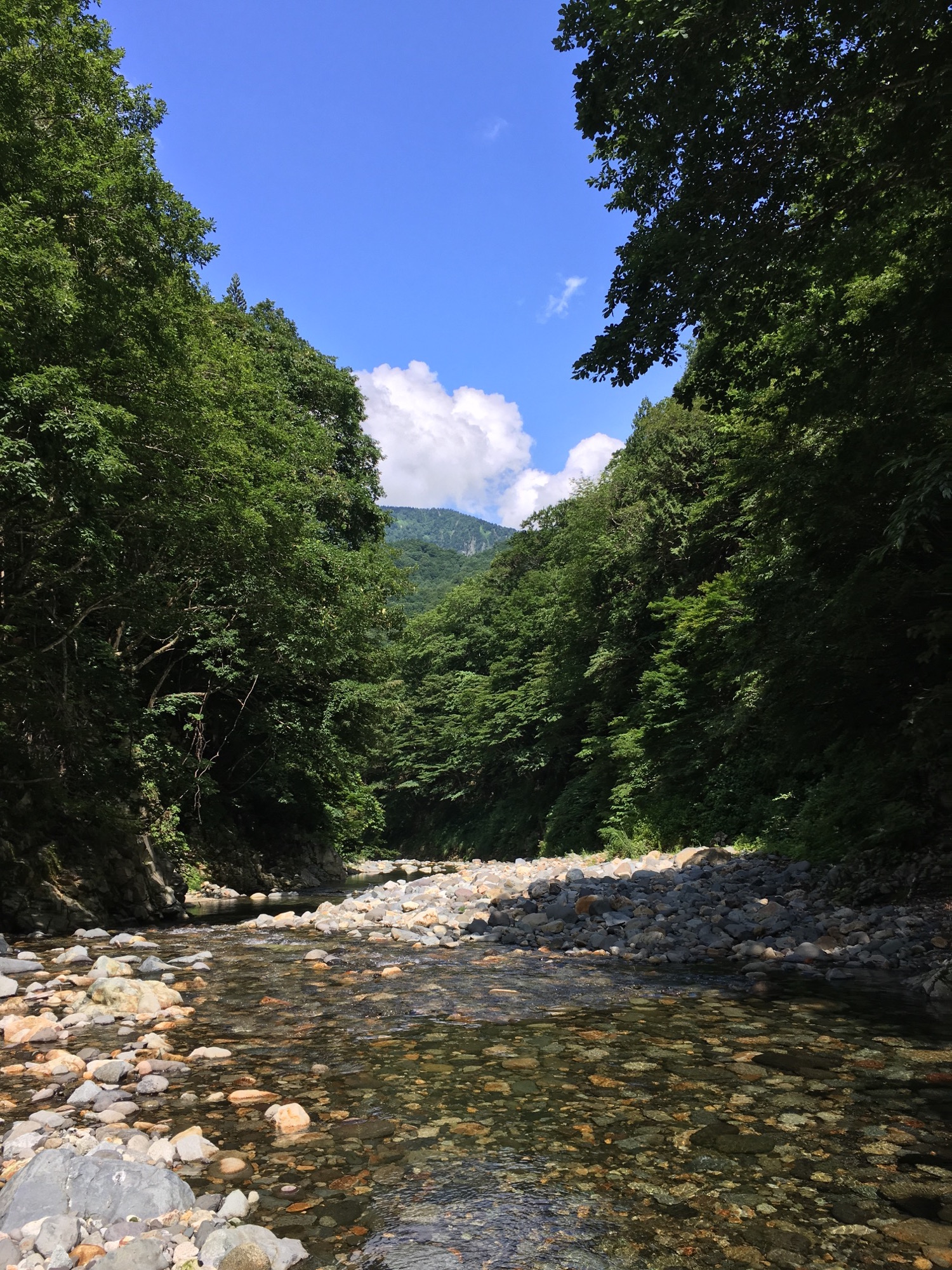 Mountain stream with blue skies and a tree covered mountain