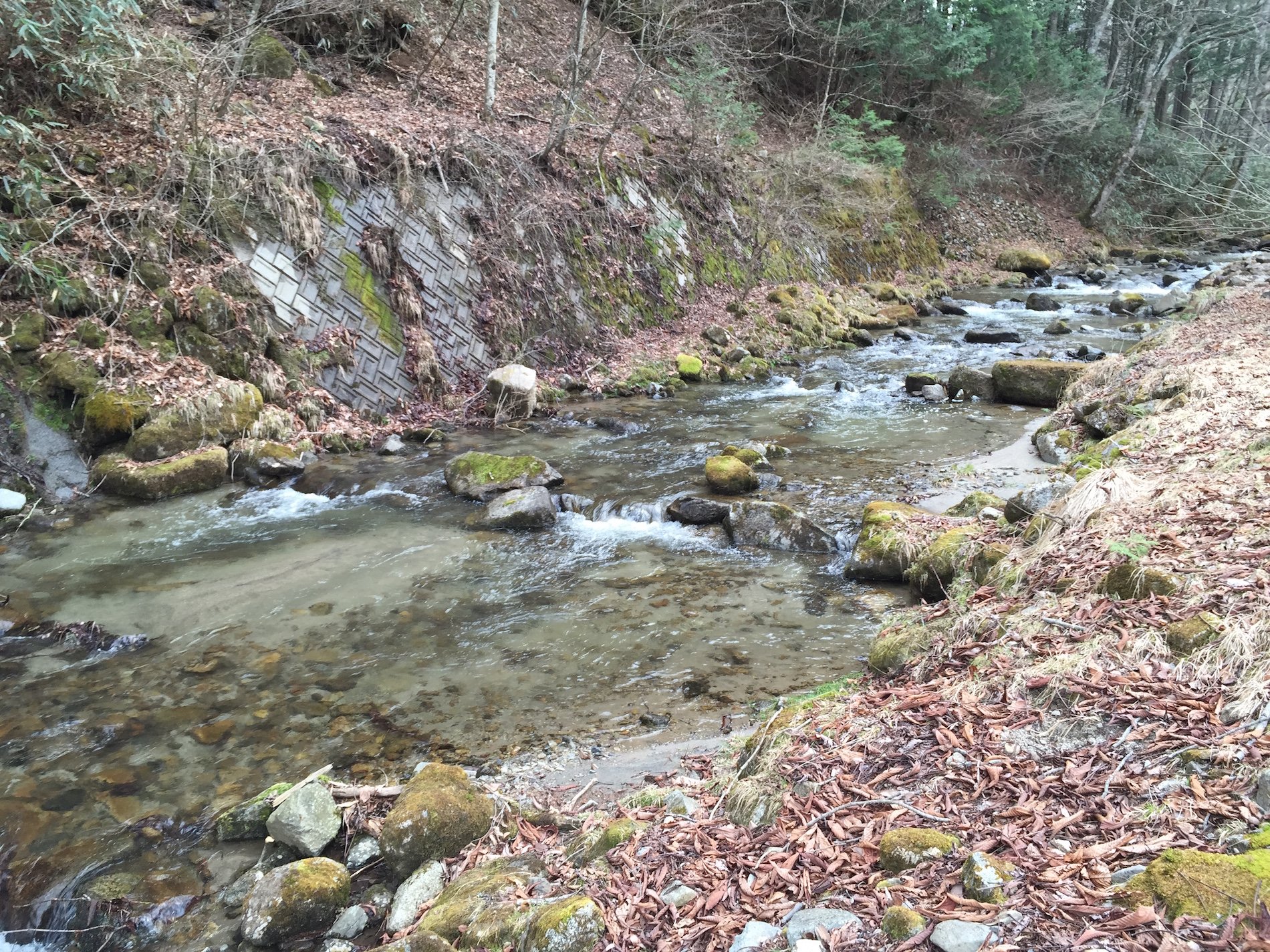 A Japanese mountain stream