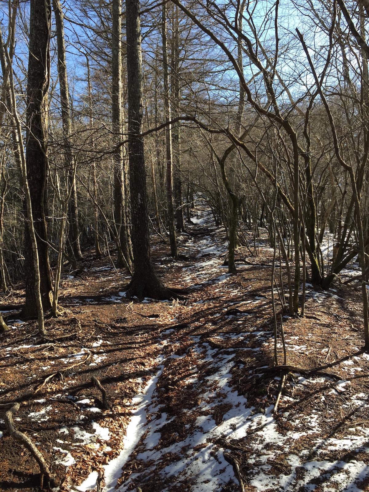 Snowy winter-scape